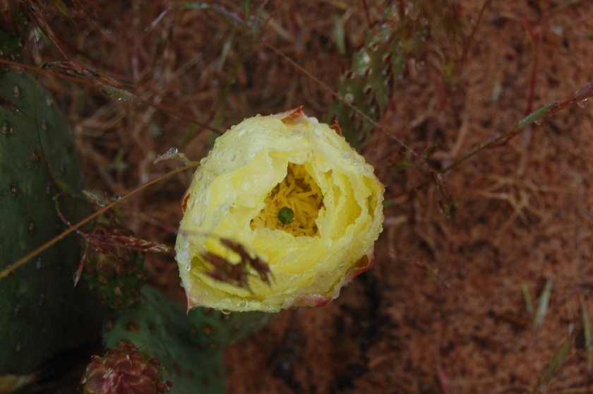 cactusfloweralone.jpg